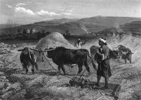 Siglo XVII Agricultura y Ganadería