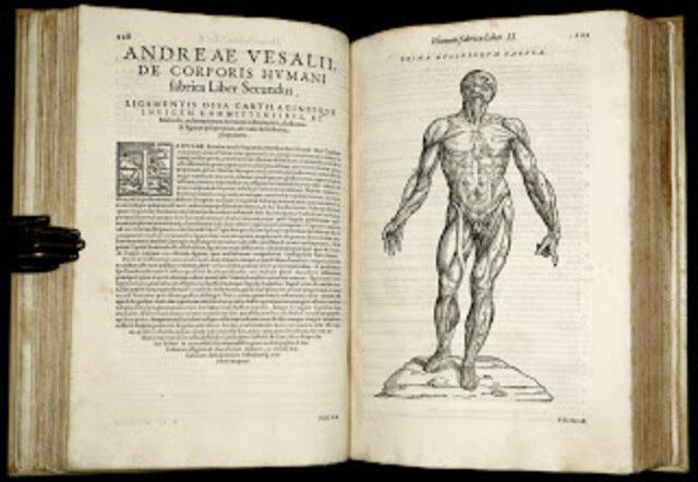 Anatomía Humana - Disección
