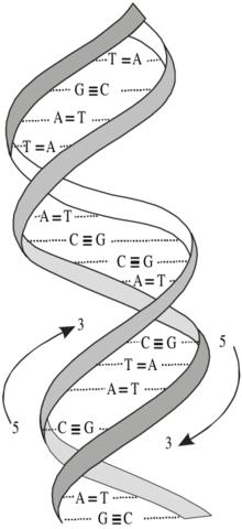 Doble hélice del ADN