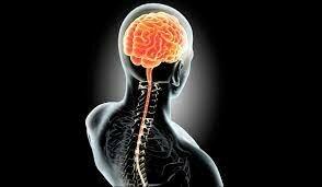 de enero de 1900 Siglo XX - El estudio del sistema nervioso y el de la mente humana.