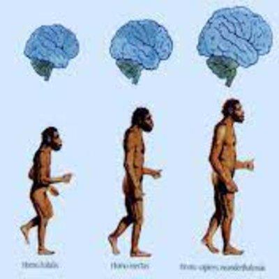Linea de tiempo antropologia timeline