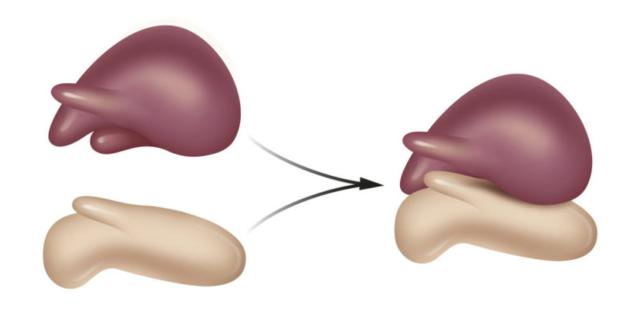 Estructura y función del ribosoma