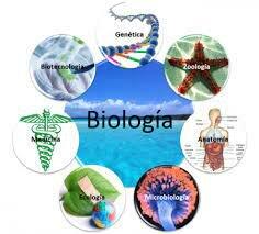 Opiniones acerca de la posición de la biología entre las ciencias.