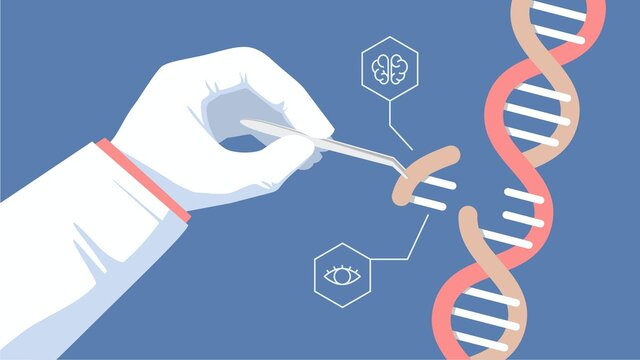 First Genetically Modified Human Embryos