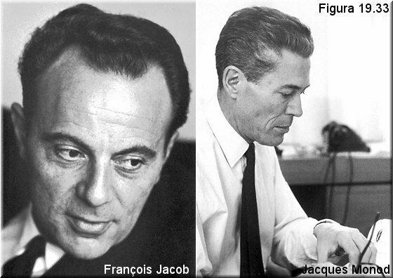 François Jacob, Jacques-Lucien Monod y Sol Spielgeman