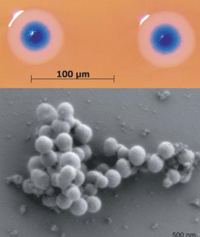 Primera célula controlada por un genoma sintético