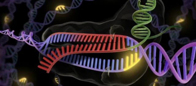 CRISPR (la revolución genética)