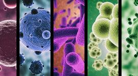 La Microbiología en el Tiempo.  timeline