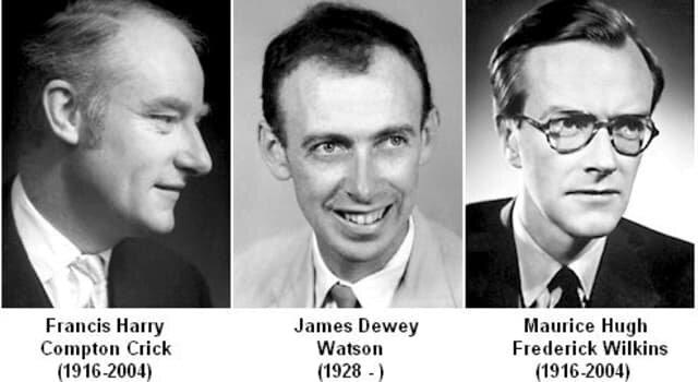 James Watson Francis Crick Maurice Wilkins