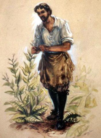 The Development of Tobacco