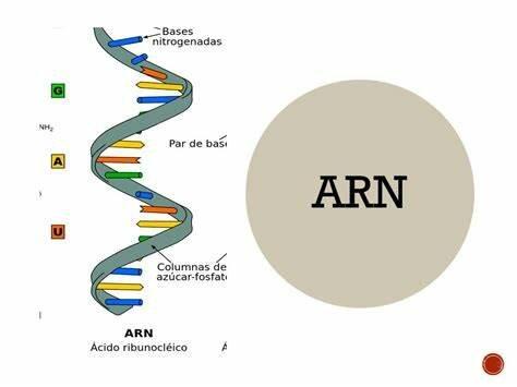 Terapias basadas en ARN