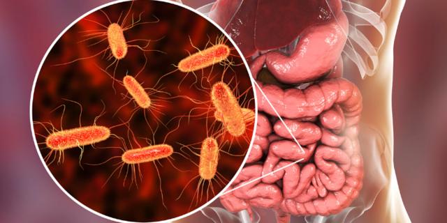 Secuenciación de genomas: Escherichia coli
