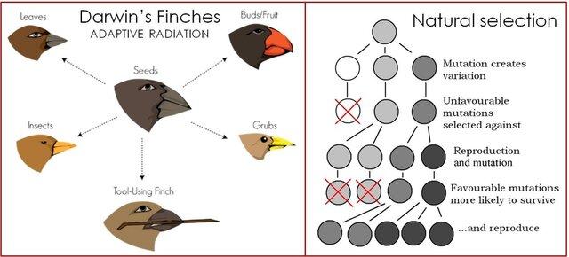 Darwin's three observations