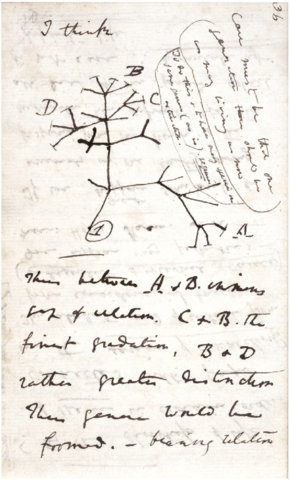 Darwin Theories Sketched on Paper