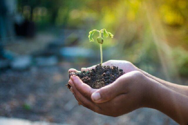 Declaración de Río sobre el Medio Ambiente y el Desarrollo y el Caribe