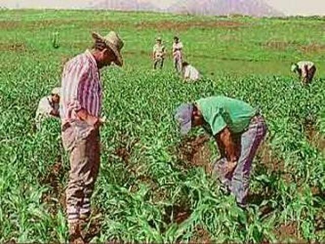 Creación del Programa de Inversiones Públicas para el Desarrollo Rural (PIDER)