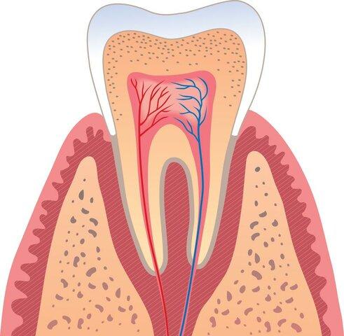 Goldman, Definición de periodoncia como: estudio de las estructuras de soporte del diente. No solamente incluye la fisiología normal de esas estructuras, sino también las desviaciones de lo normal denominadas patología