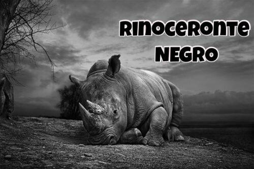 Extinción del rinoceronte negro