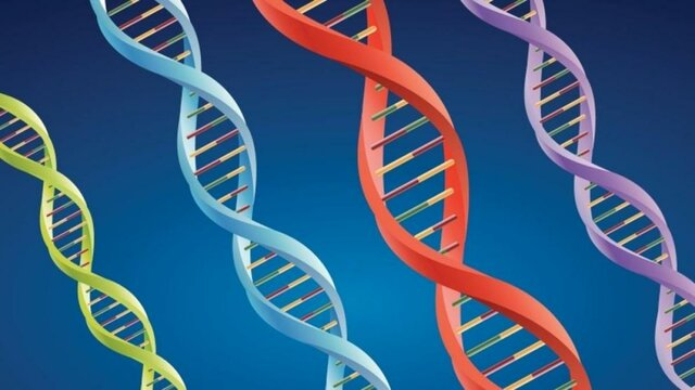 ÁCIDO DESOXIRRIBONUCLEICO (ADN O ADN)