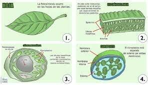Células en las plantas