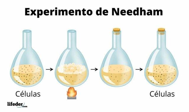 Experimento de Needham