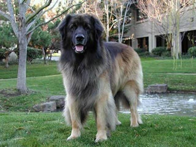 """Yoshka, el primer """"perro de compañía"""""""