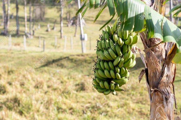 Agroexportador y Monocultivista