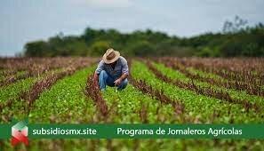 Programa de atención a Jornaleros Agrícolas