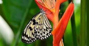 Convención relativa a la preservación de la Flora y Fauna en su estado natural