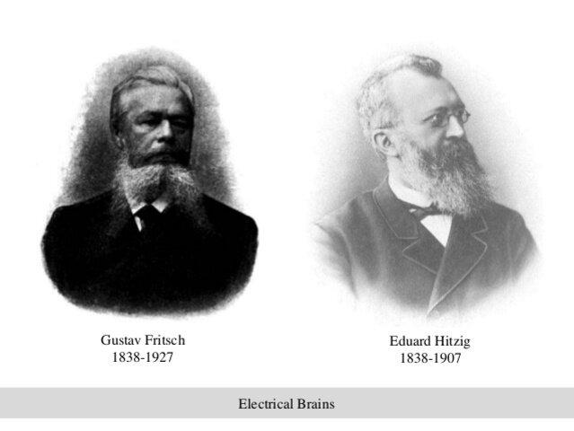 Gustav Fritsch(1838 - 1927) y Eduard Hitzig (1838 - 1907)