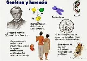 Los resultados de Mendel