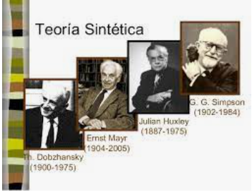 Teoría sintética 1930-1950