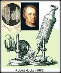 Primera Evidencia - Robert Hooke