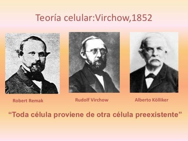 Virchow (1821- 1902), Remak (1815-1865) y Kolliker (1817- 1905)