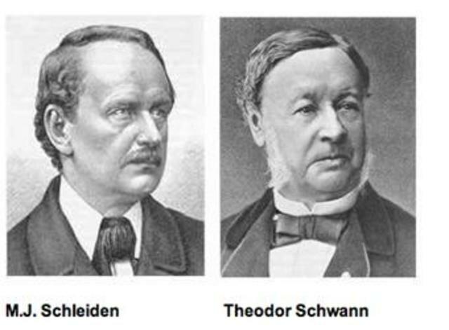 Schleiden (1804-1881) y Schwann (1810-1882)