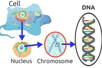 FRIEDRICH MIESCHERDescubridor del DNA en el esperma de una trucha
