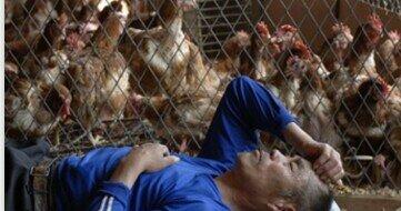 Aparece en asia la gripe aviar producida por el subtipo H5N1 del virus influenza a que puede transmitirse al hombre