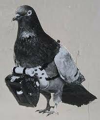 Se comienza a utilizar palomas para transmitir mensajes