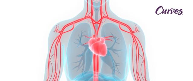 Teoría de la circulación de la sangre