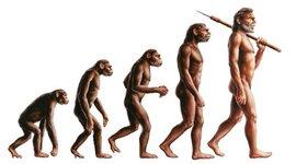 Evolución De La Especie Humana. timeline