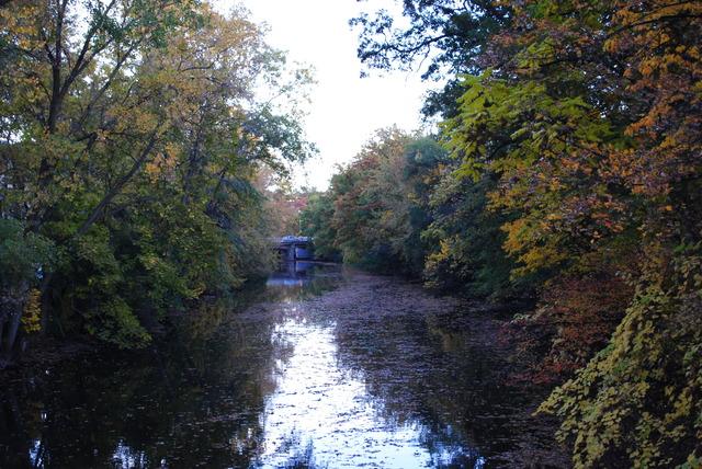 Red Cedar River Picture 1
