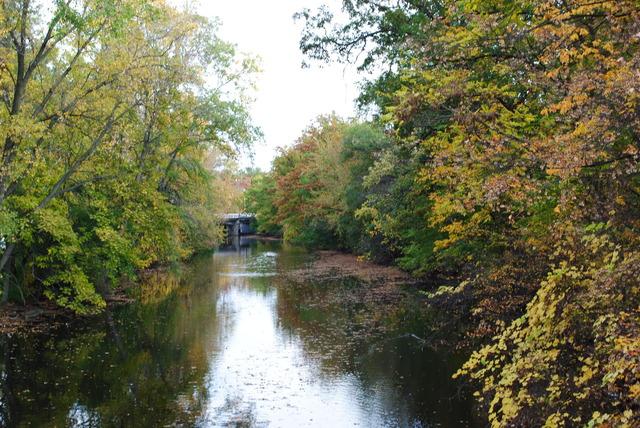 Red Cedar River Picture 2