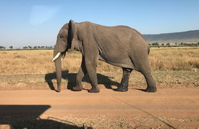 Safari is great