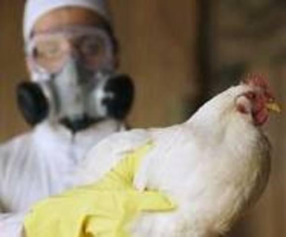 New Bird Flu Detected in Nigeria