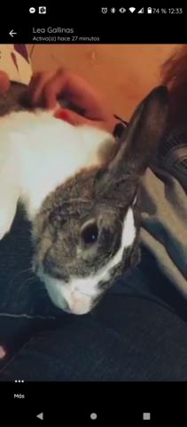 El conejo felipe