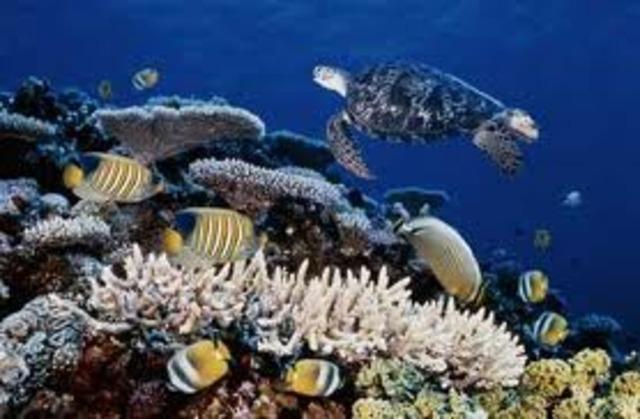 Je plongerais près de Great Barrier Reef ( I will dive near the Great Barrier Reef)