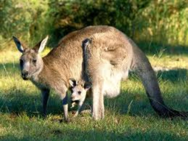 Je visiterai ma tante en Australie (I will visit my aunt in Australia)