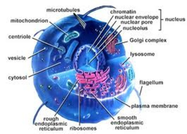 Cell Theory is proposed