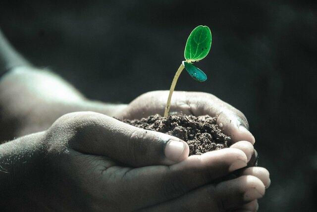 Crecimiento químico de las plantas.