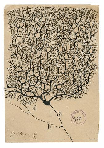 Contribuições de Santiago Ramón y Cajal